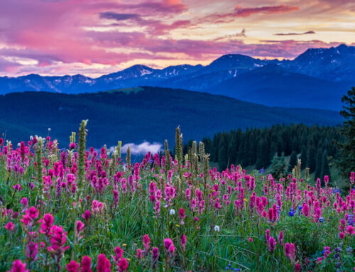 What to See and Where to Be: Crested Butte Wildflower Festival