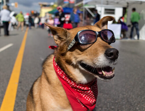 Something to Bark About: Best Dog Festivals Around the World